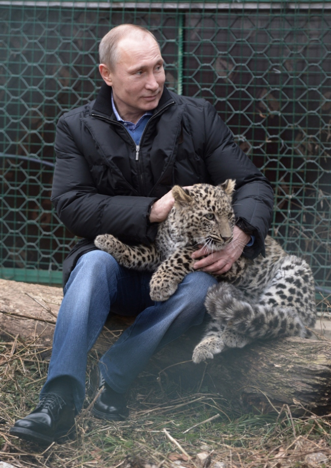 putin and snow leopard