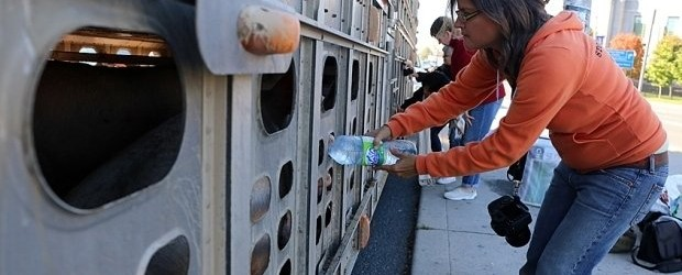 Canadian Woman Faces Up To 10 Years In Prison For Giving Pigs Water To Drink [Video]