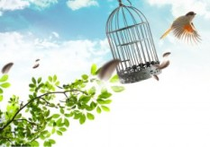 revolution of freedom bird cage